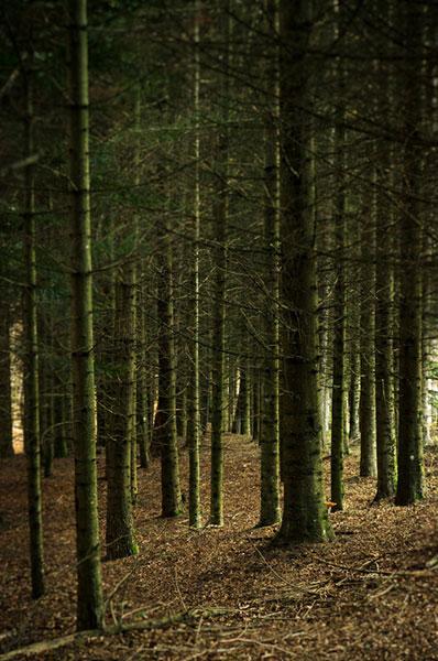 Il bosco delle fate Pratizzano (RE)
